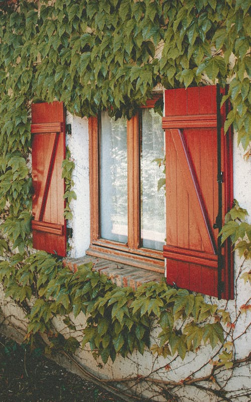 Old fashioned red window shutters on house decorated with green leaves