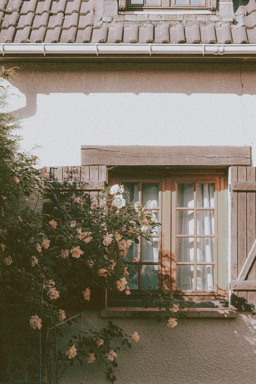 Exterior of cozy residential house with wooden window and tiled roof near lush blossoming tree on sunny day