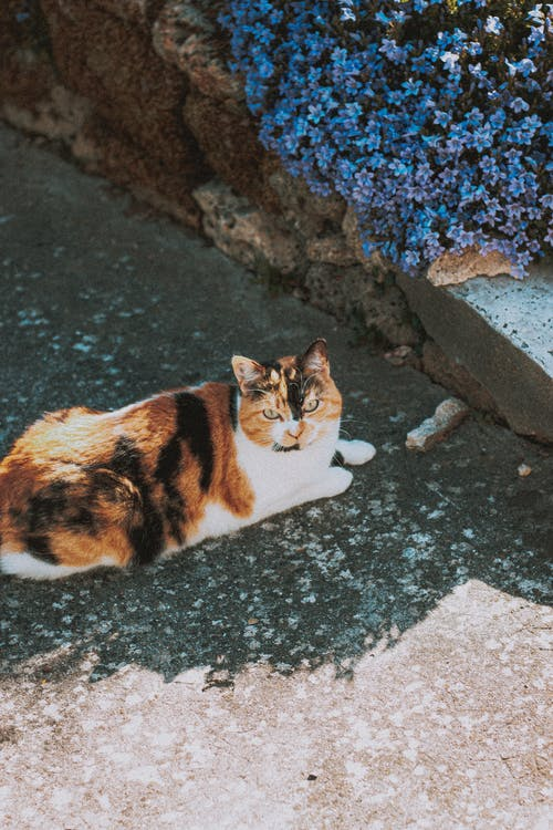 Adorable calico cat sitting on street near plants