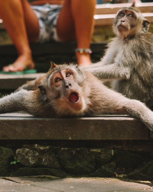 Brown Monkey on Gray Concrete Bench