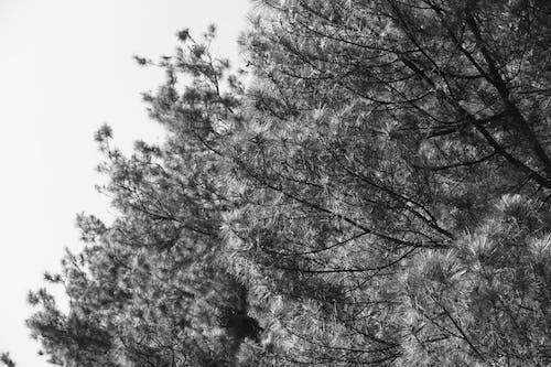 Photos gratuites de arbres, noir & blanc