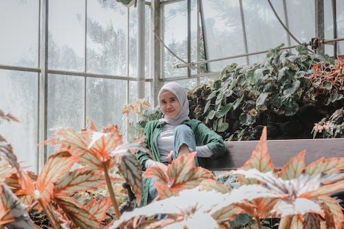 Foto stok gratis bunga, dalam ruangan, daun, dewasa