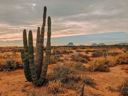 High cactus on dry terrain behind mounts under cloudy sky
