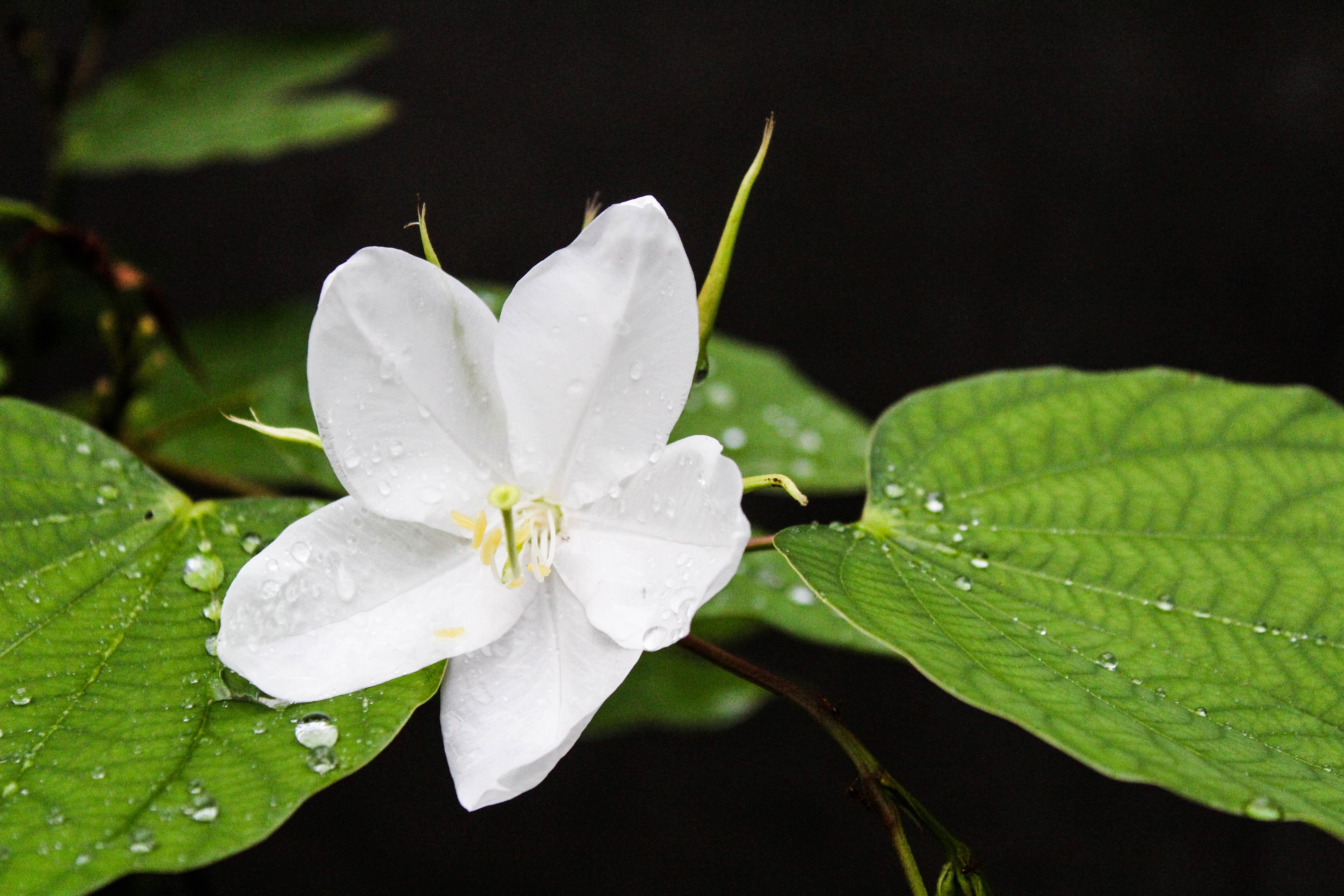 Free stock photo of beautiful flowers, flower wallpaper, HD