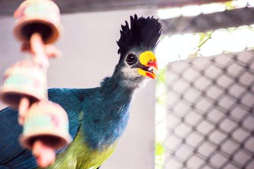 Free stock photo of bird, bird cage, blue