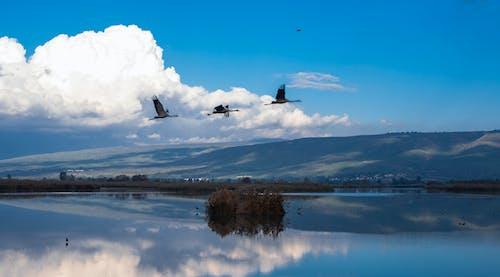 Darmowe zdjęcie z galerii z chmury, dźwigi, krajobraz, natura