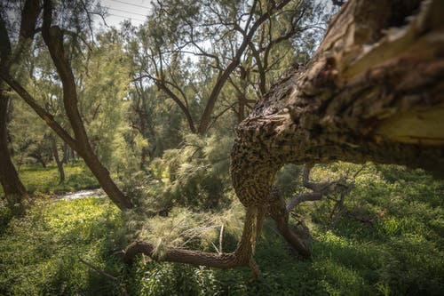 Darmowe zdjęcie z galerii z drzewa, las, listowie, natura