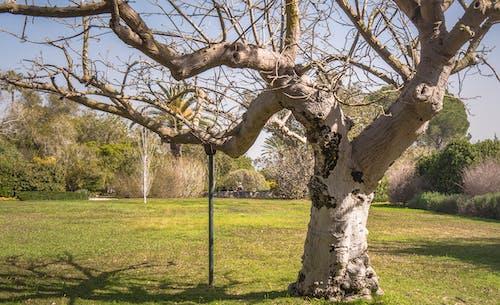 Darmowe zdjęcie z galerii z drzewo, listowie, natura, park