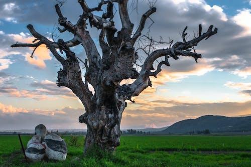 Darmowe zdjęcie z galerii z boiska, chmury, drzewo, martwy