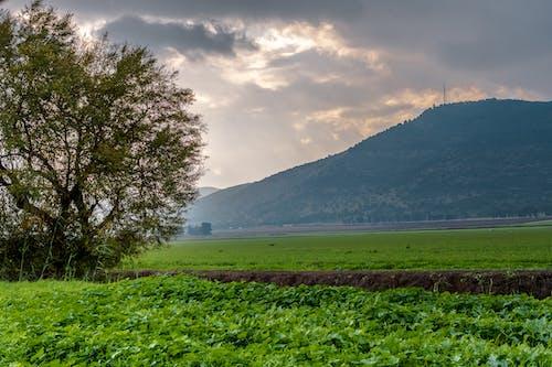 Darmowe zdjęcie z galerii z boiska, chmury, drzewo, góra