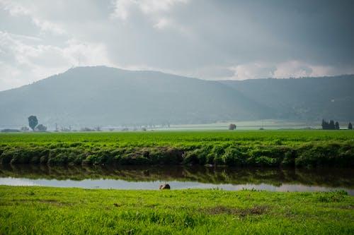 Darmowe zdjęcie z galerii z chmury, fileds, góry, natura