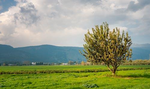 Darmowe zdjęcie z galerii z boiska, drzewo, góry, niebo