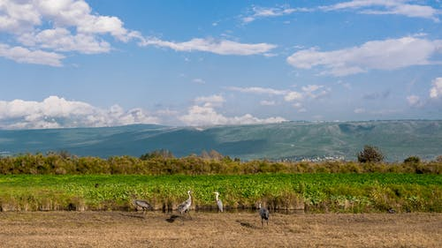 Darmowe zdjęcie z galerii z chmury, dźwigi, góry, krajobraz