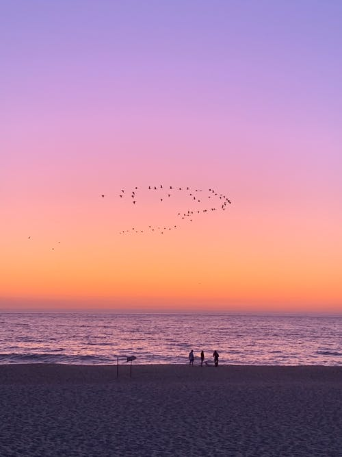 Silhouettes of people walking on sandy coast near sea at sunset under bright sky with flock of birds