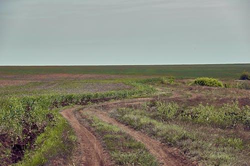 Foto profissional grátis de agricultura, área, árvore, atraente
