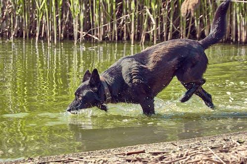 Foto profissional grátis de ação, acasalar, água, alegre