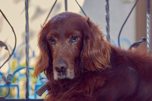 Foto profissional grátis de abrigo, aliança, animal de estimação, antigo