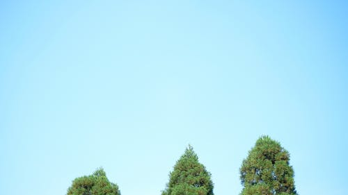 Immagine gratuita di 公園, 新宿, 日本