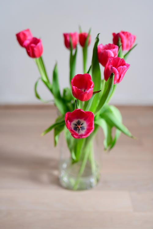 Bouquet of bright red tulips in vase placed on lumber table in room