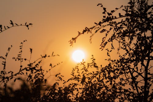 Free stock photo of atmosphere, backlighting, branch, bright