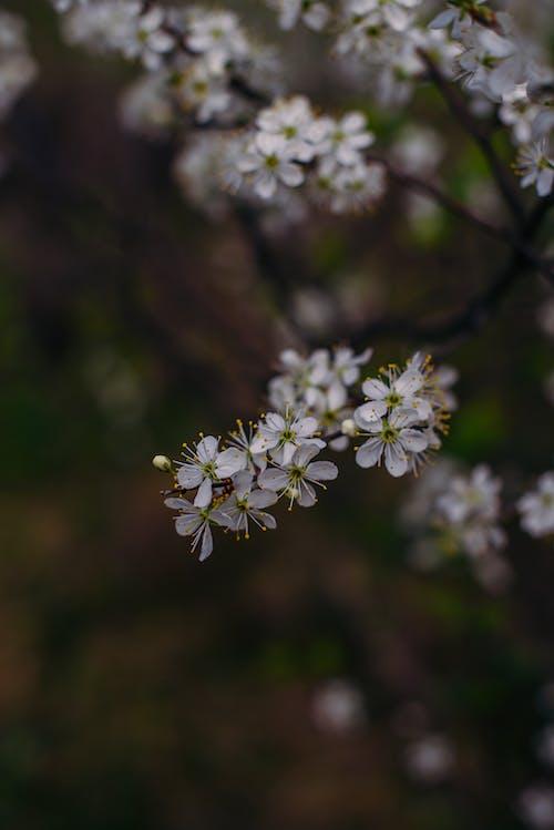 Blooming twigs of tree in garden