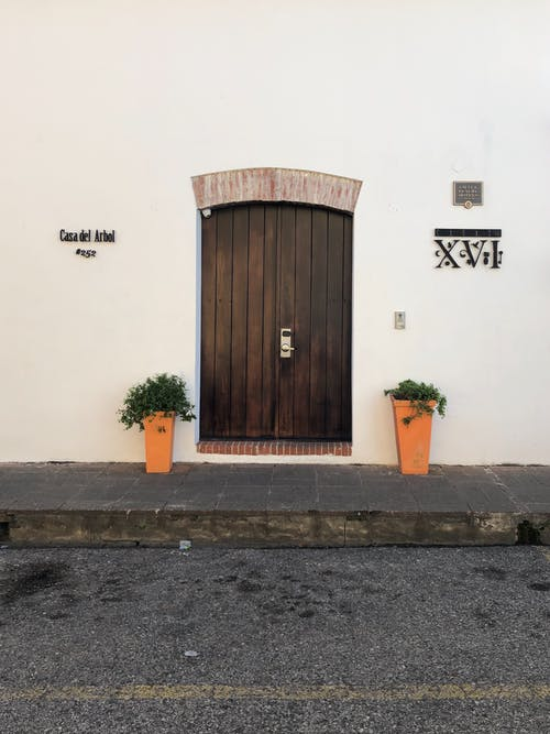 Closed wooden door of stone building with green plants in pots at entrance