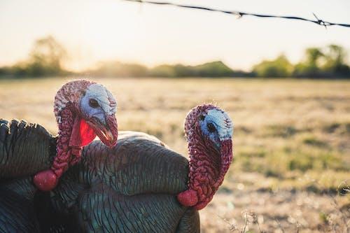 Imagine de stoc gratuită din agricultură, animal, animale domestice