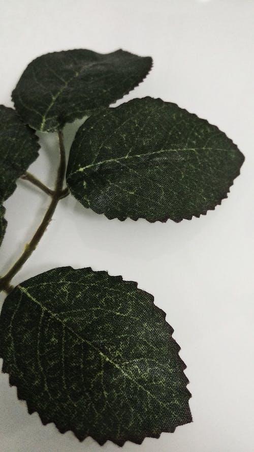 Ilmainen kuvapankkikuva tunnisteilla hoja verde, hojas, naturaleza