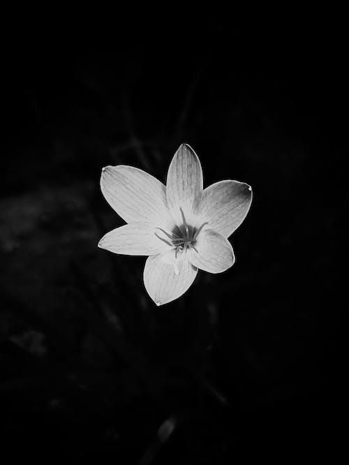 Fotobanka sbezplatnými fotkami na tému aan lichtbak toevoegen, botanika, exteriéry