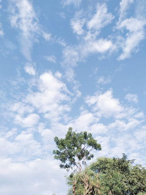 Treetop with leafy branches and cloudy sky