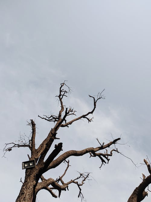 Withered tree with leafless branches