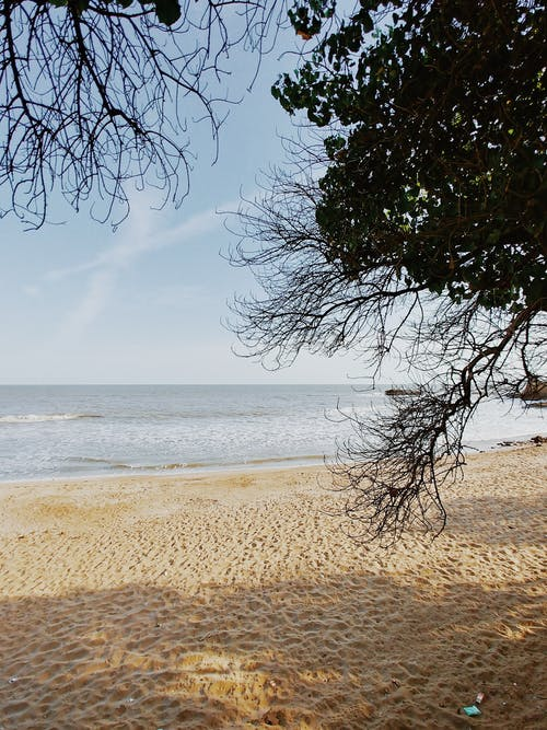 Serene sandy coast and tranquil sea behind leafy branch of tree in early morning