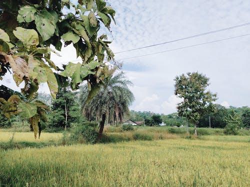 Leafy trees planted among green meadow of countryside area in tropical country during cloudy daytime