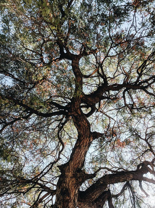 From below of old tree with leafy branches during sunny morning in autumn