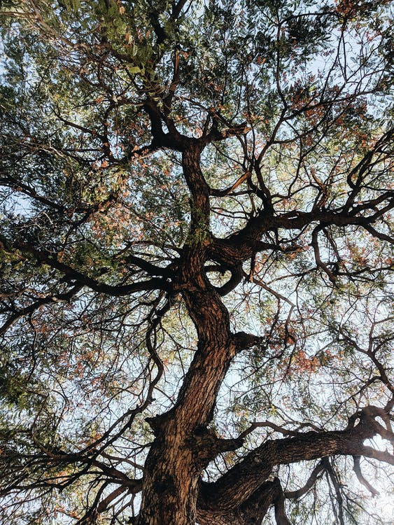 Tall tree with leafy branches
