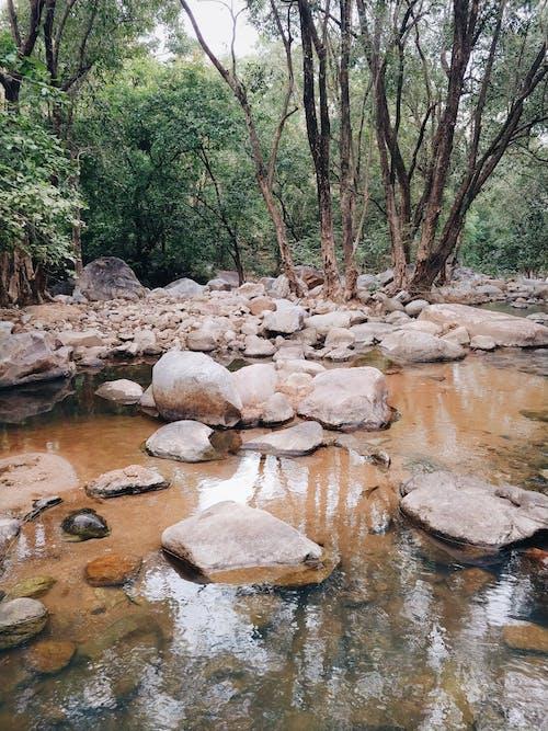 Rocky terrain with creek near forest