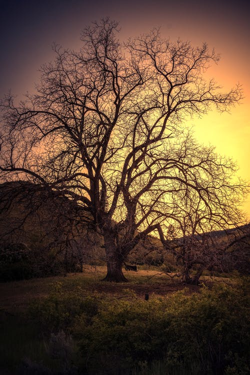 Free stock photo of sunset, tree