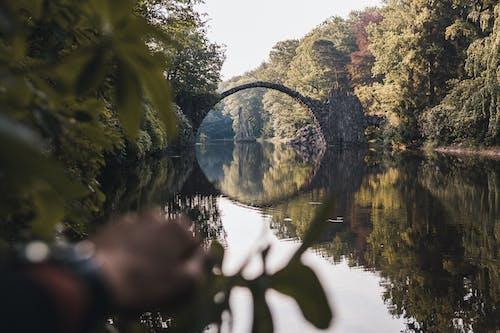 Ảnh lưu trữ miễn phí về ánh sáng, cảnh quan đẹp, cầu, cây