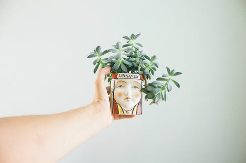 Person Holding Green Plant on Brown Box