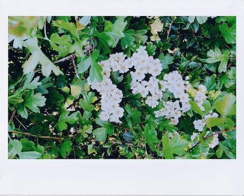 Gratis lagerfoto af blad, blomst, blomstrende, Botanisk