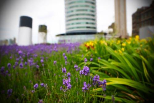 건축, 광각, 꽃, 도시의 무료 스톡 사진
