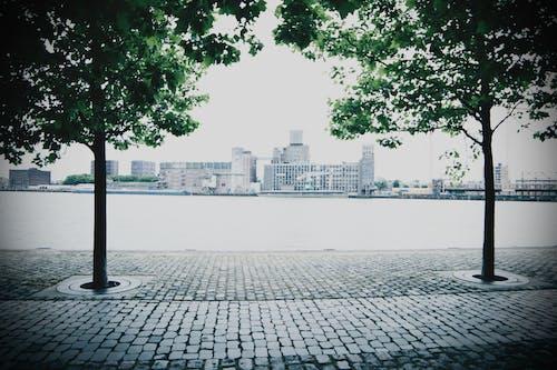 건축, 나무, 도시, 로테르담의 무료 스톡 사진