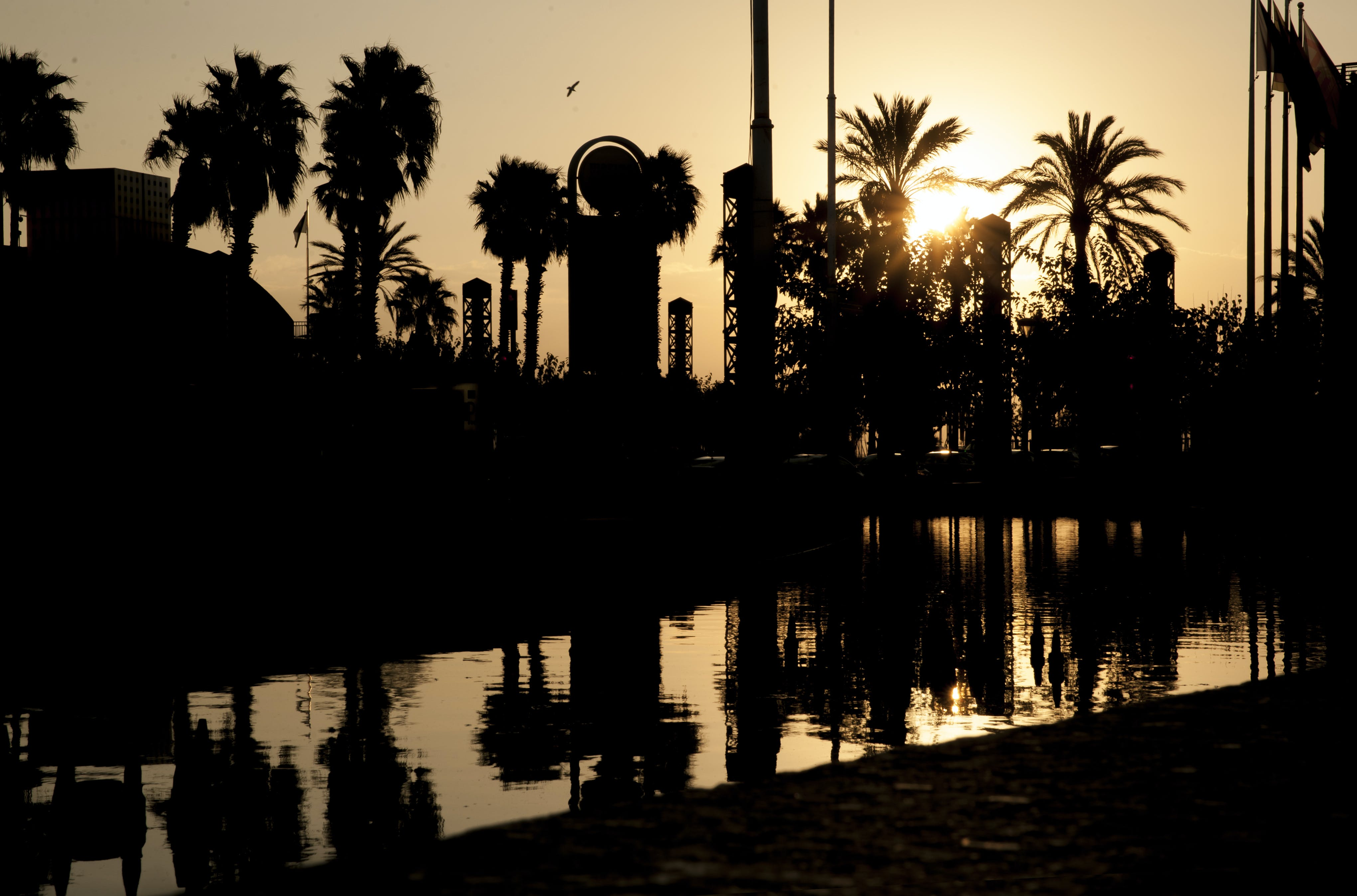Free stock photo of palm, palm tree, sunrise