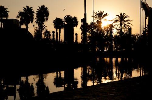 Darmowe zdjęcie z galerii z drzewo palmowe, palma, wschód słońca