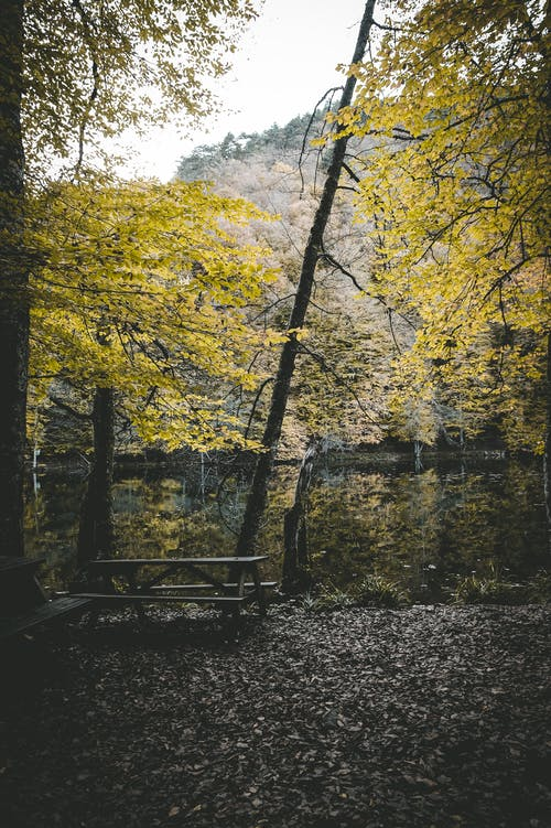 Tranquil scenery of shabby bench and table placed on meadow with yellow leaves amidst autumn woodland