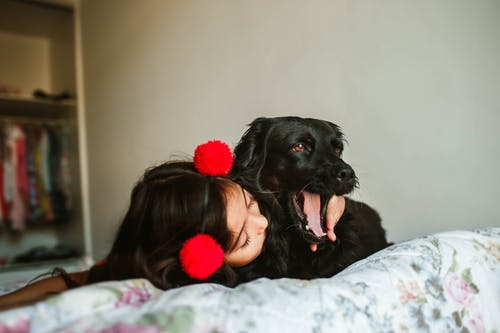 Girl kissing adorable yawning Spaniel on bed