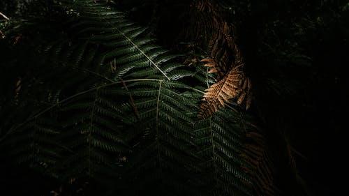 Free stock photo of colours, fern, fern leaf