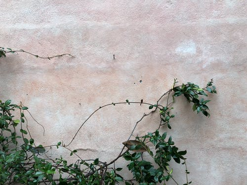 Free stock photo of 4k wallpaper, background, black wallpaper, brached