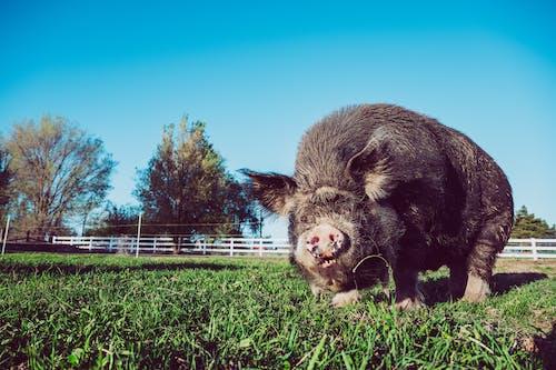 Fotos de stock gratuitas de al aire libre, alimentar, ángulo bajo, animal