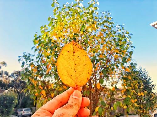 Free stock photo of autumn, autumn colors, autumn leaf